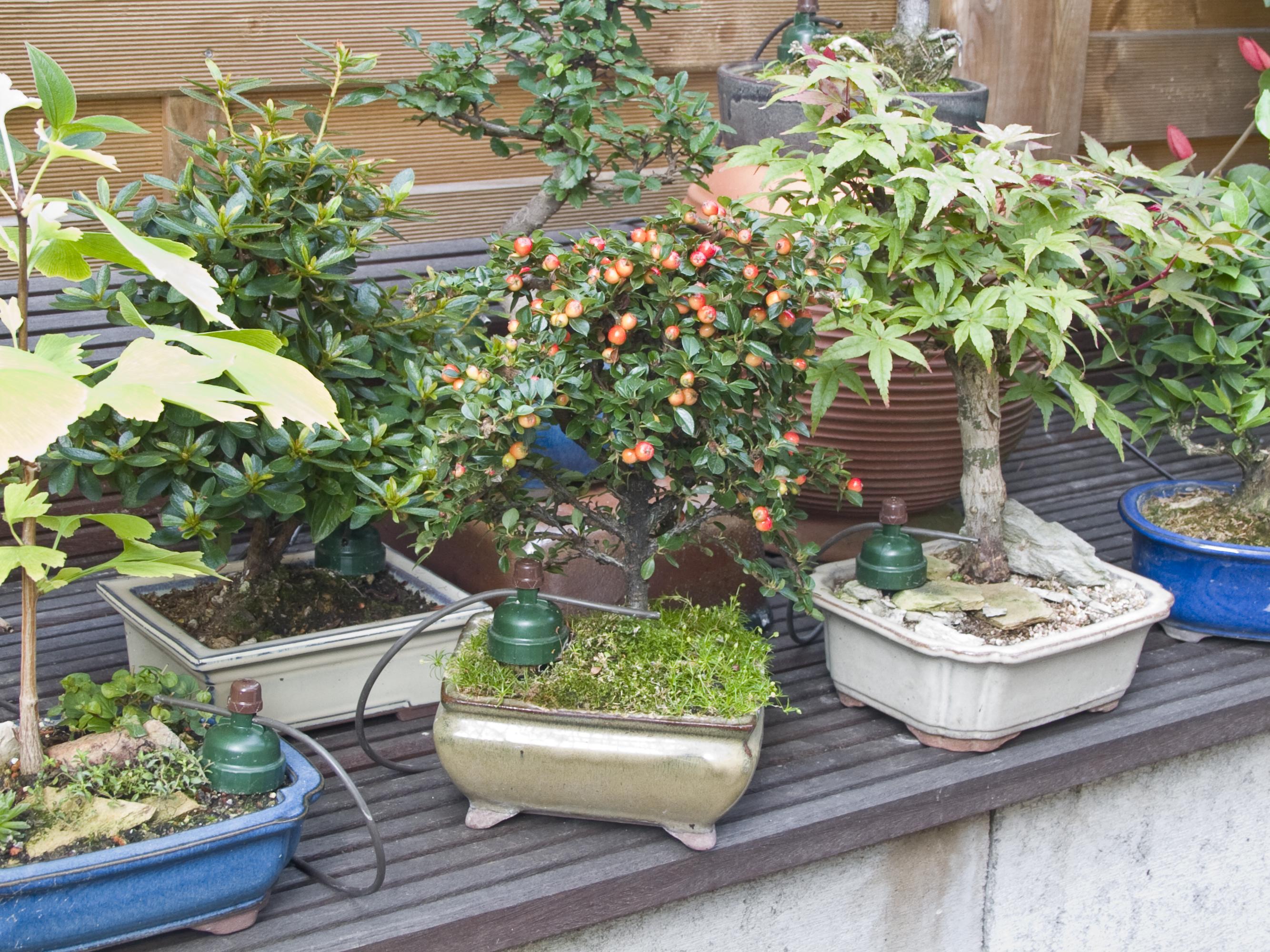 tropf blumat bonsai bambach gbr blumat shop. Black Bedroom Furniture Sets. Home Design Ideas